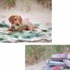 Tweedmill Recycled Wool Blankets Throws Wales